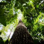 Amazônia 2