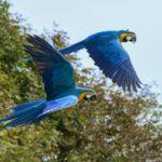 Pássaros Diversos 1