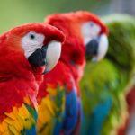 Pássaros Diversos 5