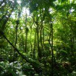 Amazônia 3