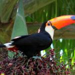 Amazônia 5