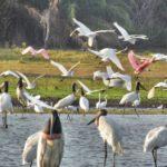 Pantanal 5