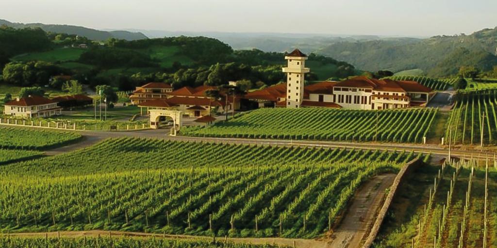 Um bom vinho: O prazer de conhecer uma vinícola